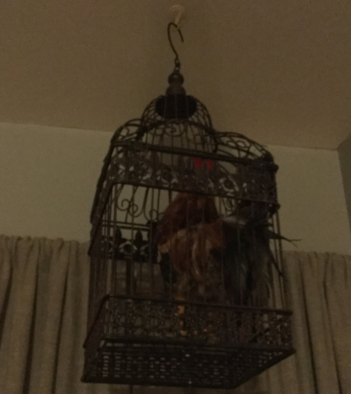 CAGES hanging birds